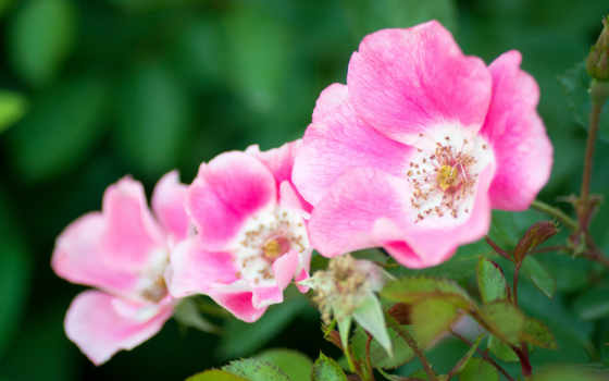 цветы, дивные, свой