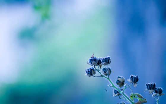 blue, цветы, макро, flowers, картинка, source, цветов, февр, природа,