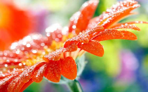 water, drops, цветы, desktop, макро, photography, fresh,