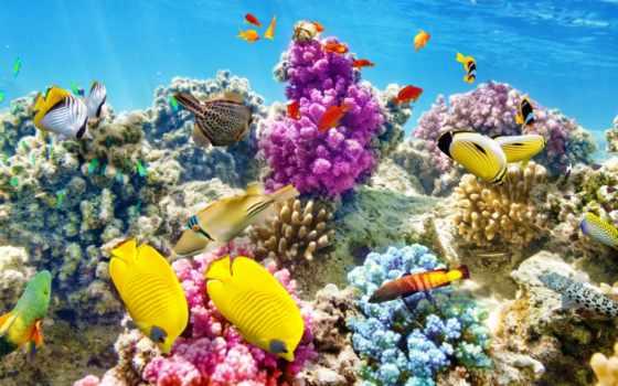world, underwater, фотообои