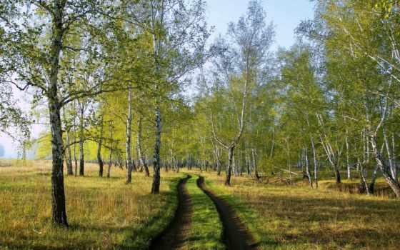 березовая, grove, природа, imgator,