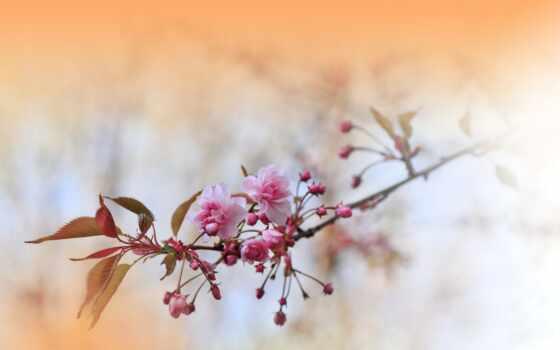 природа, love, цветы, abstract, artistic, art, весна, celebration, design, креатив, цвета