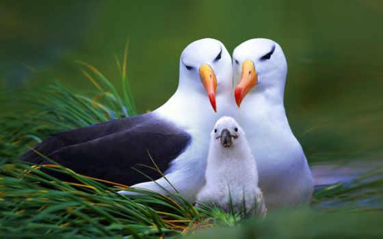 гнездо, albatross, дек