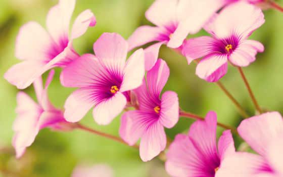 цветочки, cvety, которых,