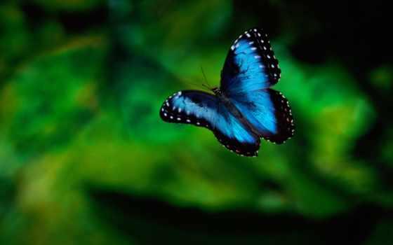 бабочки, бабочка, красивые