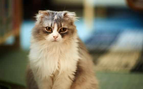 zhivotnye, взгляд, кот