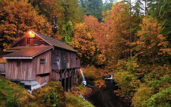 лес, осень, река
