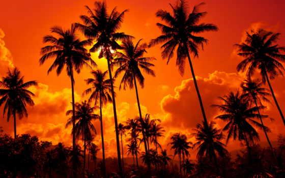 закат, пальмы, пляж