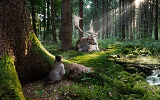 лес, resolution, фея