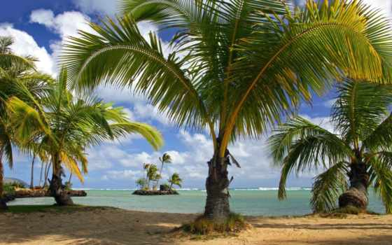 natureza, praia, galinha, hava, photoshop, parede, pintadinha, céu, мар,