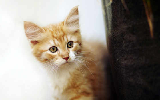 красивые, украсят, яркие, collector, любого, котенок, выглядывает, настроения,
