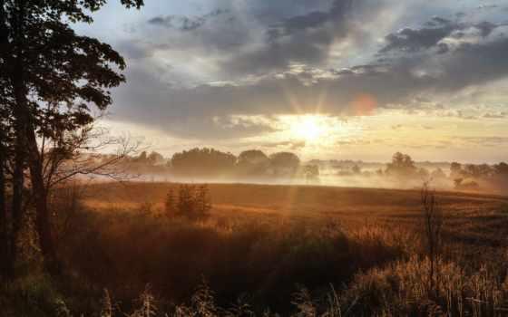 поле, утро, sun, свет, трава,