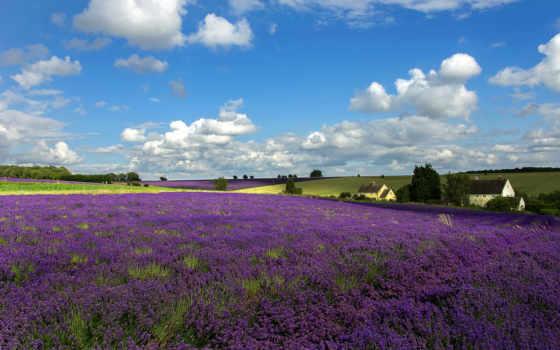 cvety, flowers, land, заставка, поле, lavender, oblaka, margin, природа, trees,