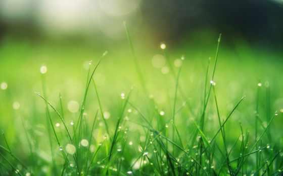 зелёный, погода, трава, ukraine, ozhidatsya, весна, cvety, лес