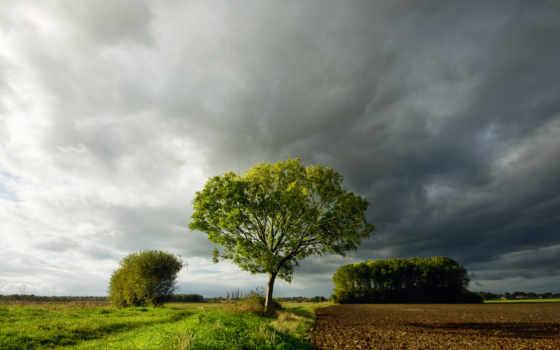 поле, дерево