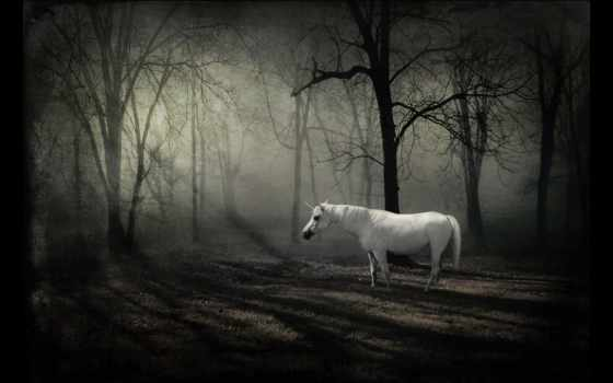 unicorn, forest, dark