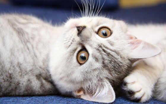 кошки, кошек, how, обладатели, many, котов, поведение, хозяина, руках, необычное, замечали,