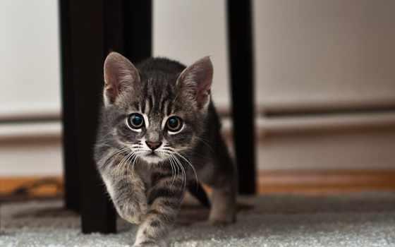 zhivotnye, природа, котик