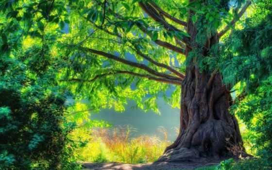 природа, summer, дерево, яркий, лес, landscape, ствол, красивые, свет, trees,