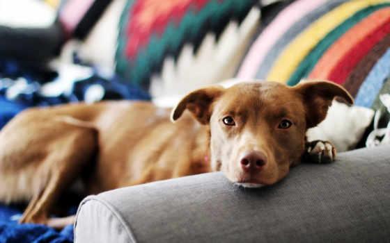 блох, блохи, снять, собак, домашних, najlepiej, животных, domu, wszędzie, ale,