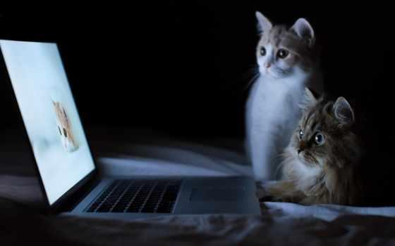 снег, smartphone, леопард, котенок, кошки, коты, кот, любопытные, ноутбука, котики, сайте,