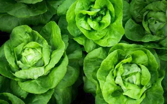 lịch, juice, растение, greenery, meal, пожаловаться, добавить, который, спелый, ягода, горстка