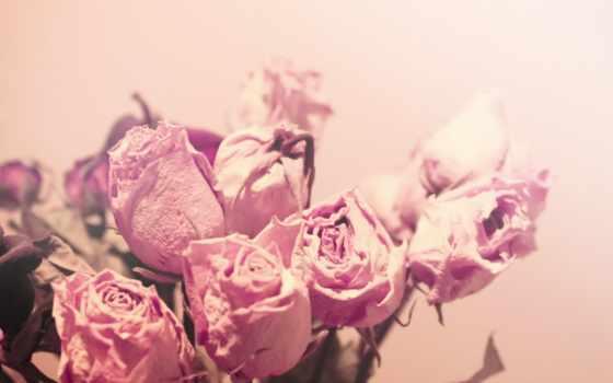 цветы, color, нежность