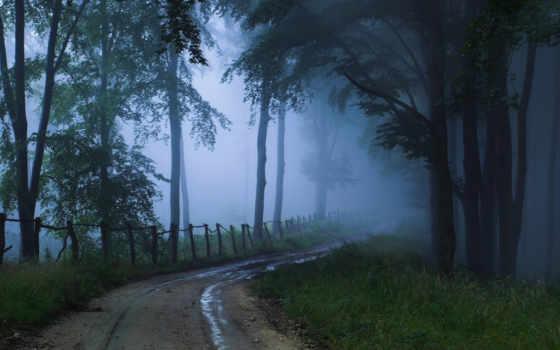 туман, дорога, природа