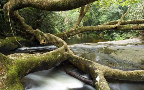 rio, дерево, janeiro