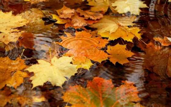 осень, water, листья, заставки, лужи, желыте,