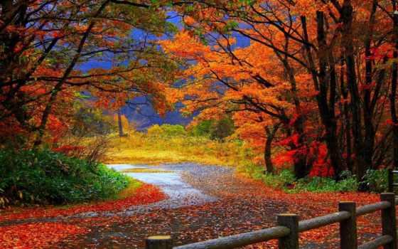 осень, природа, лес, trail, desktop, landscape, paisajes,