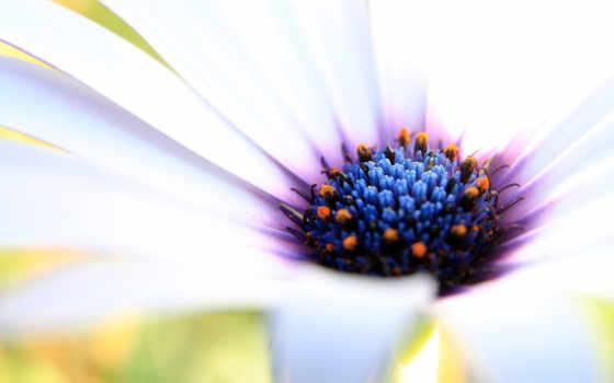 красивые, макро, цветов