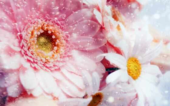 цветы, фоны, весенние, нежность, весна, цветочные, метки, розовое,