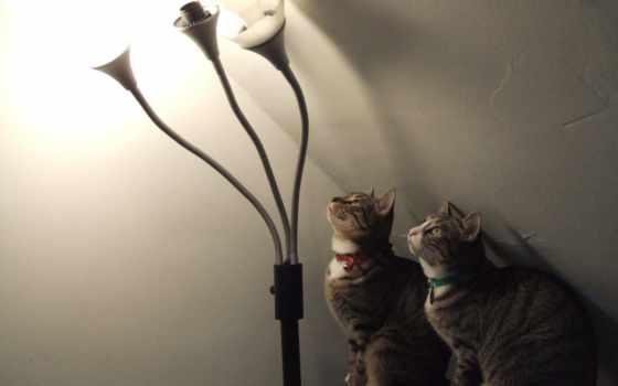 cats, animals, lamps, high, black, свет, кот, аттракцион, kitties,