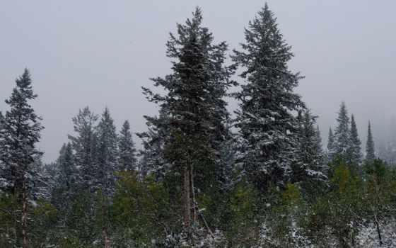 обои, природа, обоев, красивых, подборка, зима, кр