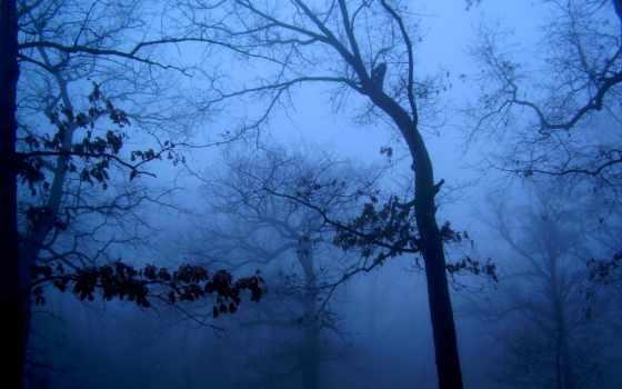 утро, туман, widescreen