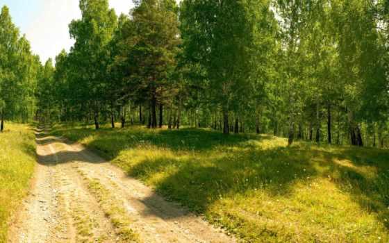 лес, природа, дорога, trees, summer,