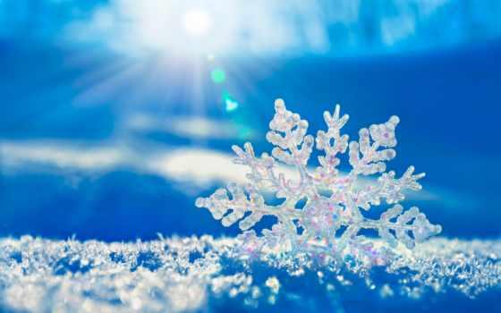 снежинка, макро, снег, winter, browse,