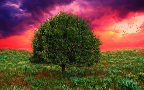 дерево, поле, art, закат, нояб,