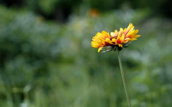 весна, cvety, картинка, цветы, года, весенние, тюльпаны, сезоны,