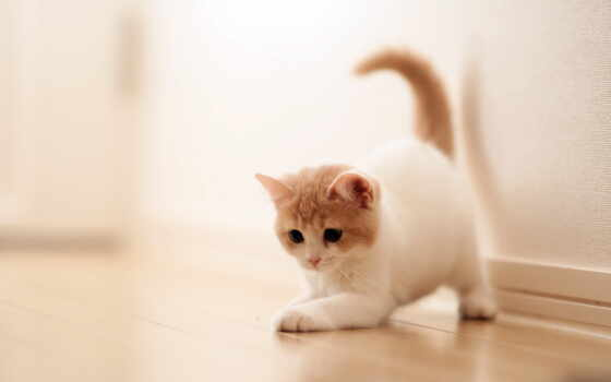 котенок, dome, кот, кошки, заставки, могут, cats, фоны,
