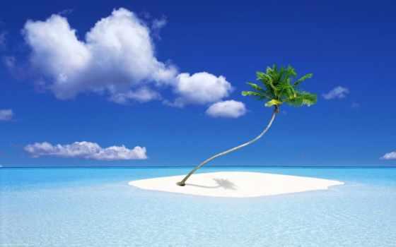 isla, islas, mundo, del, palmera, pinterest, mejores, los,