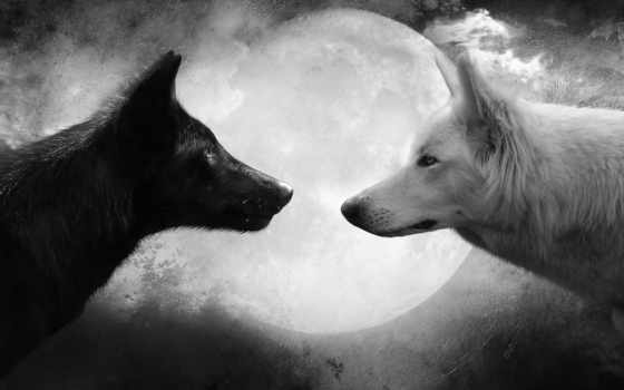wallpaper, hd, black, and, white, pictures, луна, животные, волк, волки, wolfs, волков,