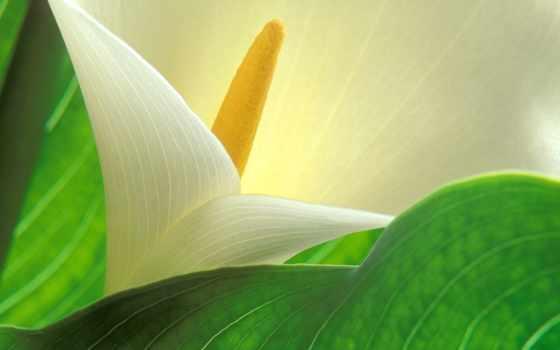 Цветы 34862