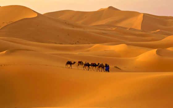 пустыня, пустыни, сахара, караван, пустыне, песок, верблюды,