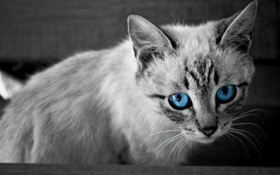 pictures, mageia, кот, white, black,