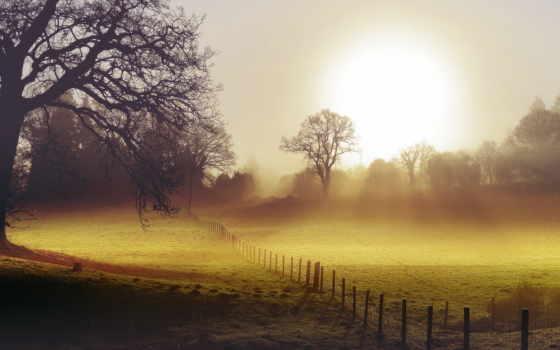 туман, поле, утро