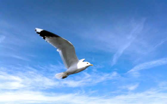seagull, free, desktop, sounds, качество,