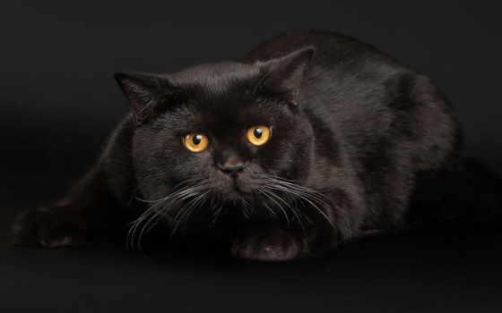 кот, кошки, black