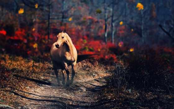 лошадь, лес, осень, best, animal, дорога